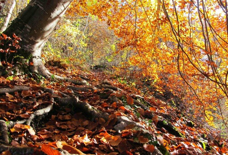 2 - Sentier sous les roches - Bouilland