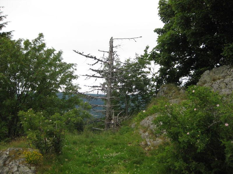 Col du Breitenstein.