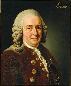 carl_von_linne_copyright_wikipedia