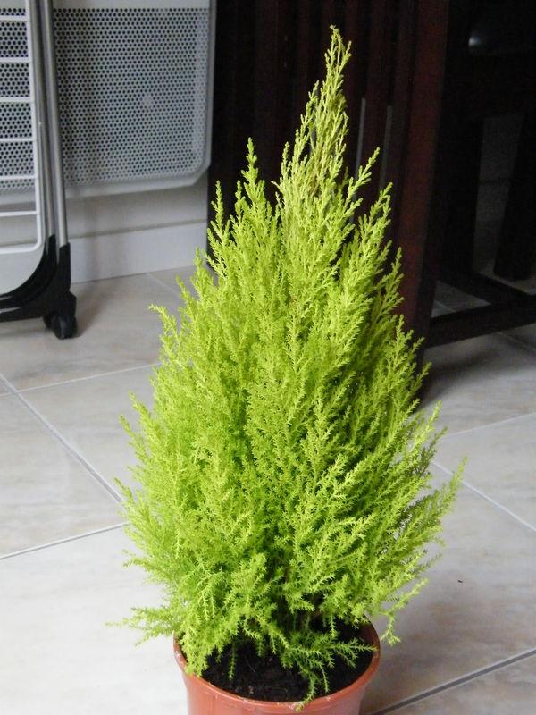 Des fleurs des plantes des nouvelles fraiches for Arbuste en pot pour terrasse