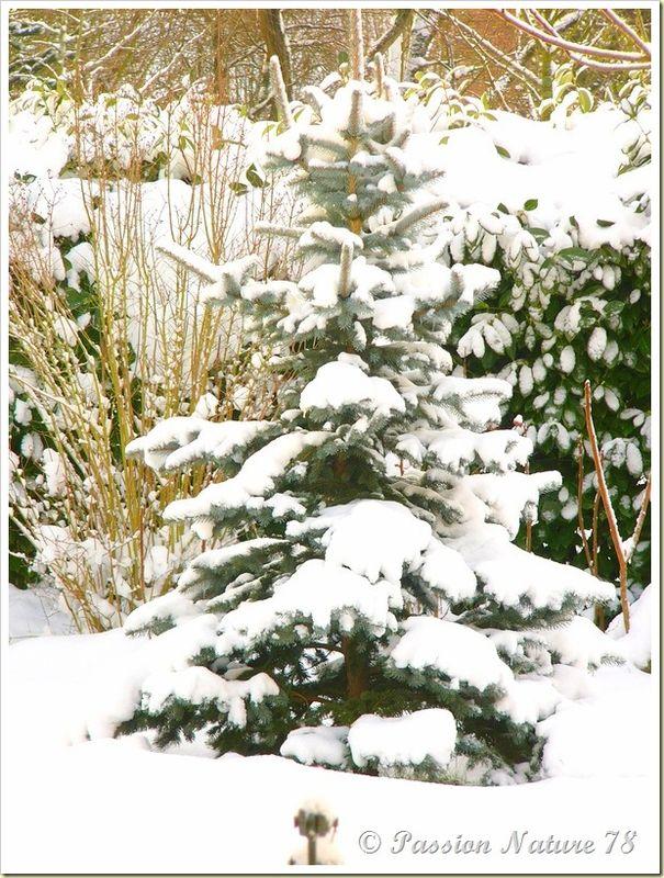 Notre jardin en hiver (9)