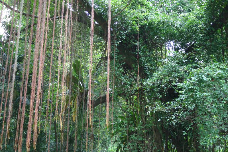 Singapour jardin botanique stephan et marie france en for Jardin botanique singapour