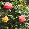 fleurs 075
