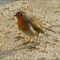 oiseaux_10