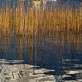 Reflets sur le lac ...