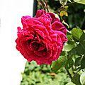 fleur 3 nathalie dentzer