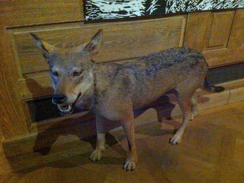 musee de la chasse loup
