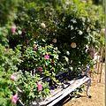 Windows-Live-Writer/jardin-charme_12604/DSCN0545_thumb