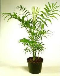 Les plantes d polluantes pour la salle de bain conseils en am nagements pa - Plante salle de bain ...