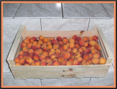 abricots1
