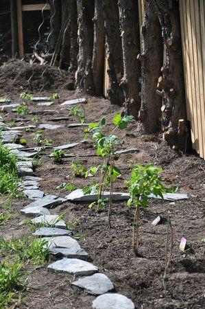 jardin avril 2013 015