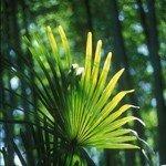 bambu_11