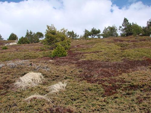 2008 04 24 Le nature sur le Mont Mézenc (3)