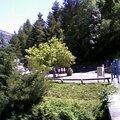 Des arbres remarquables