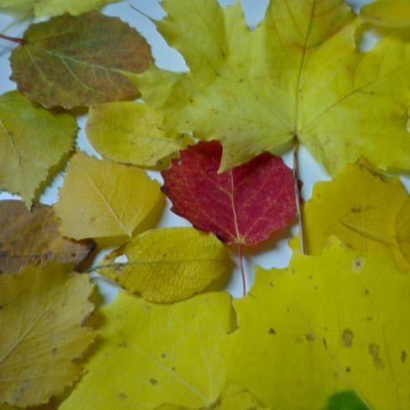 feuilles_mortes_7