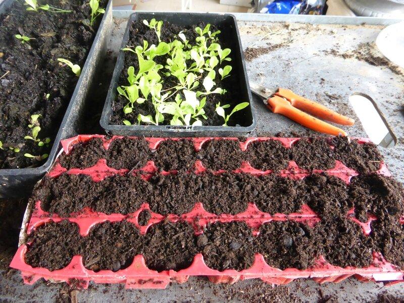 19-salade-plants (5)