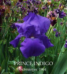 Prince Indigo