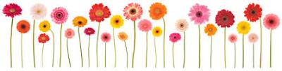 flowers_row