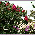 Rhododendron 0205152