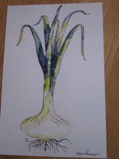 Carte postale - L'oignon (2)
