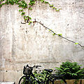 vélo, nature_1469