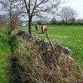 cheval pres de Bains