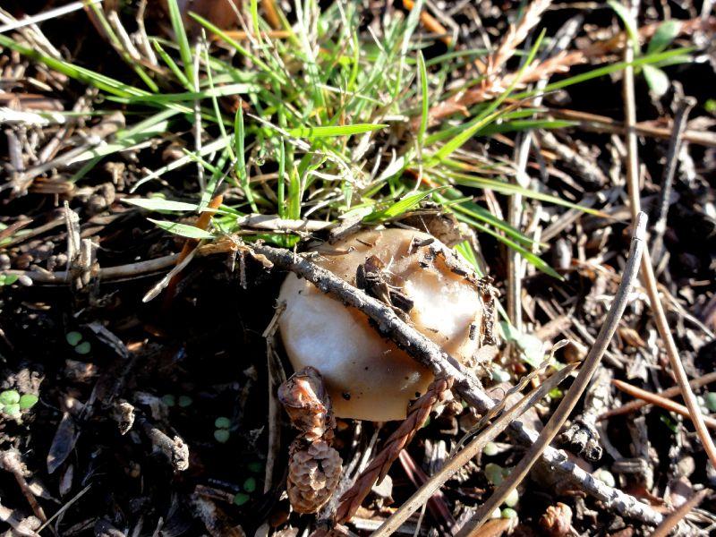 champignon-05852