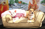 Disney_Bolt_Beverly_Hills_Chihuahua_DVD_Release_ptQnF_wjTsbl
