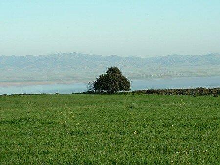 SEBKHA_D_ORAN