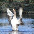 Animaux Sauvages _ Wild animals
