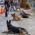 Presentation Canine