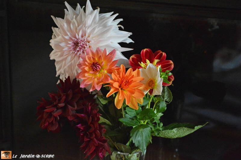 Bouquet de dahlias label Rouge