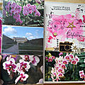 Orchidées-12