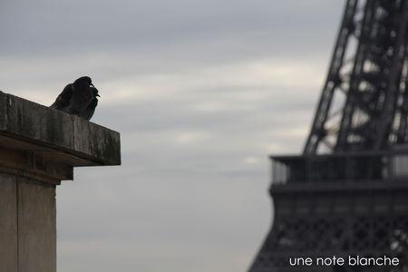 tour_eiffel_pigeons