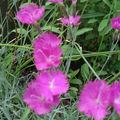 Encore un petit tour au jardin avant la chaleur ....dés potron-minet ....