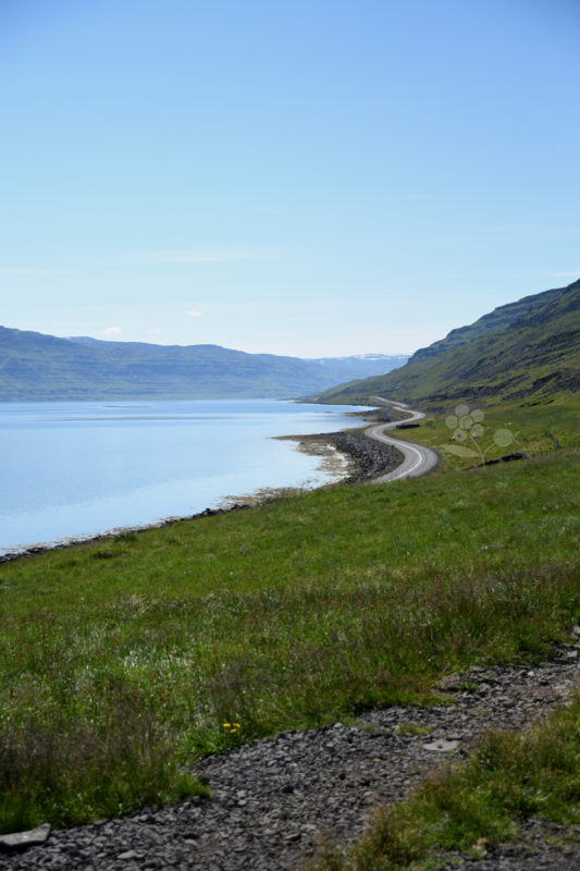 Islande, paysage Litlibaer Skötufjörður_2
