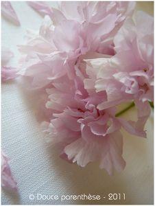 Fleur_de_prunus_5