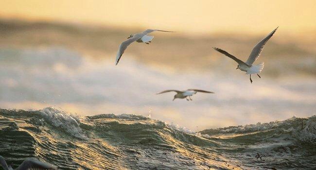 oiseauxmouettes_lpo_650