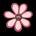 bouton fleur marguerite rose