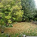 L'automne est là !!!!!! le vent frisquet aussi ......