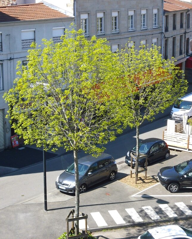 arbre place Saint-Pierre 21 avril 2015