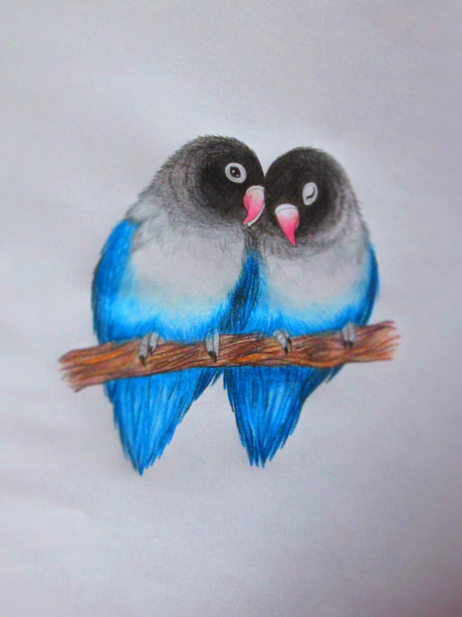 Pioupiou amoureux chadik for Oiseau couleur