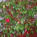 Le Ficus de ValerieC - http://valerie.corner.over-blog.com
