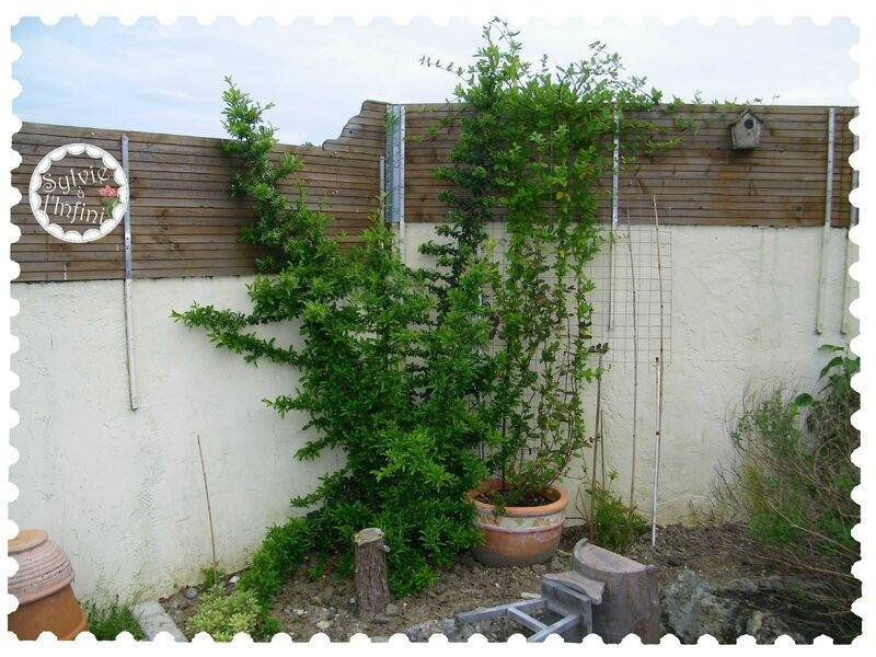 Jardin 1er mai 2015 (2)