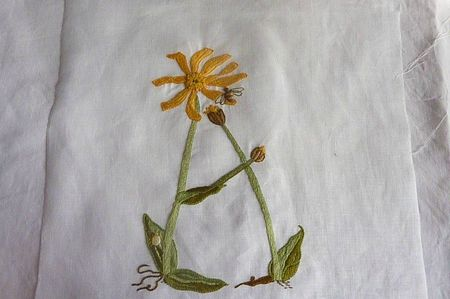 A comme arnica (2)