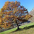 Fin d'automne