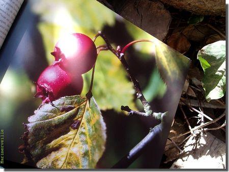l_automne_2
