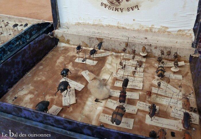 80 Brocante Vide-grenier ville Lyon Insectes