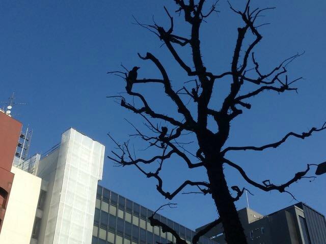 corbeau à Tokyo