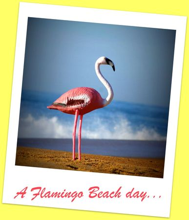 a_flamingo_beach_day